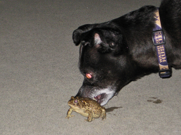 Toadlicking