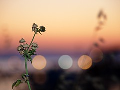 No comment.... (dranidis) Tags: flowers blue light sunset red sea sky orange plants plant flower nature water yellow closeup night dark twilight hand bokeh horizon olympus greece thessaloniki 43 dimitris salonica thessalonika saloniki salonika fourthirds thessalonica  explored kalamaria  e520  olympuse520 gimp26 dranidis dimitrisdranidis