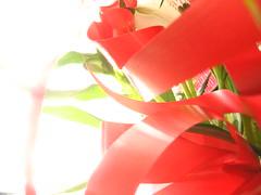 i fiori in regalo