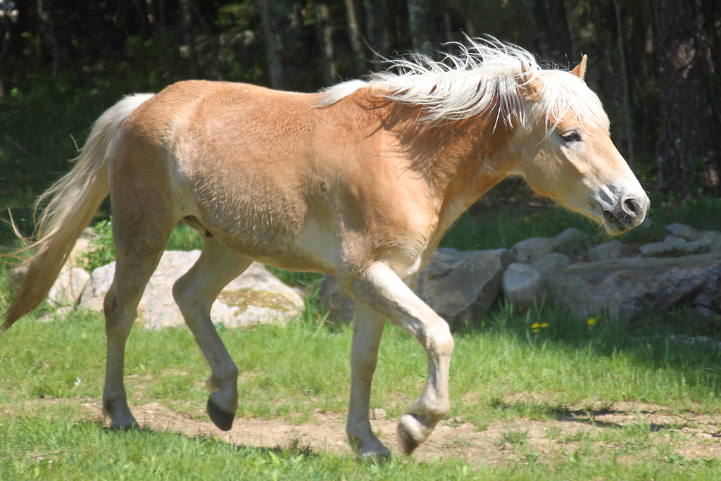 horses 057x