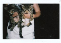 (mary_robinson) Tags: cats film instant instax