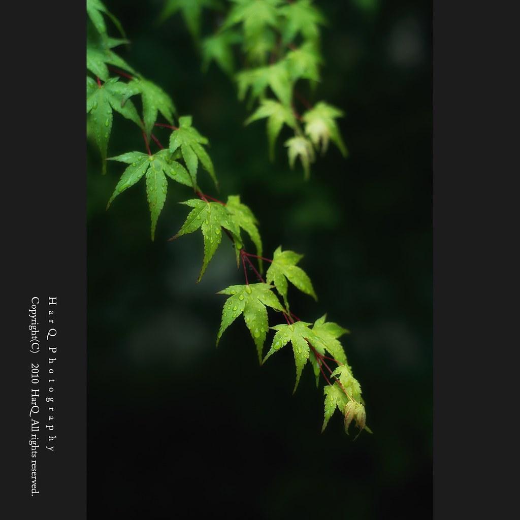 Rainy Green *