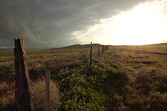 (babylaughter) Tags: sky sun clouds fence barbedwire tumbleweed dirtpath woodenpost babylaughter wildbrush