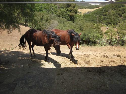 Dr. Frank Ryan Charity/Birthday Event at Bony Pony Ranch