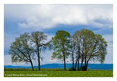 West of Portland (Doyle Wesley Walls) Tags: trees nature sky oregon westofportland lagniappe clouds doylewesleywalls text beauty photograph crop