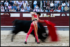 matias-tejela-2 (Manon71) Tags: bulls toros bullfight lasventas matíastejela sanisidro2011
