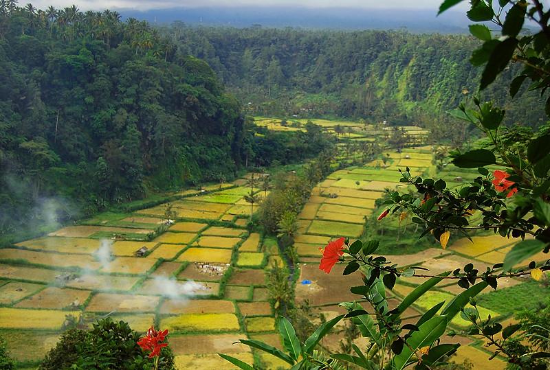 _Bali_rice_field_3_