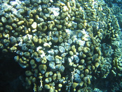 137_3714 (LarsVerket) Tags: egypt snorkling fisk undervannsfoto
