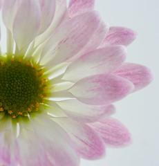 Flower Study (Debbie G) Tags: flower macro blossom appeasement photofaceoffplatinum pfogold pfoisland07