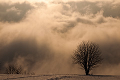 Sky's the Limit (andywon) Tags: sky mist tree nature fog clouds germany landscape deutschland nebel force dramatic schauinsland badenwrttemberg explored stohren