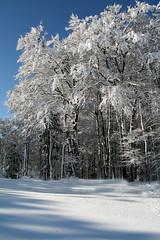 Les Vosges sous la neige (laurent jung) Tags: ski station montagne rouge hiver arbres neige janvier vosges gazon abigfave