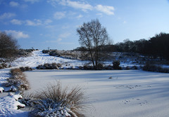 ashdown forest (Ally81) Tags: frozenlake wintermorning ashdownforest