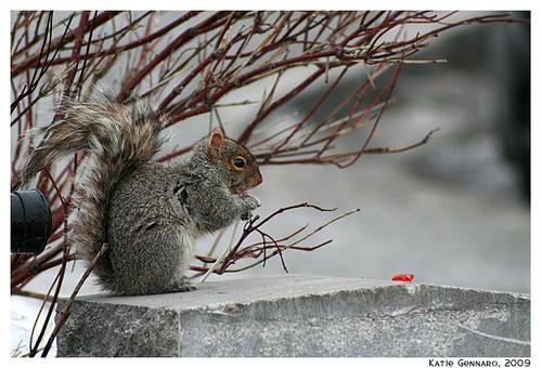 Squirrel, meet lollypop