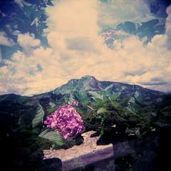 Pedra Azul (ES) (gleicebueno) Tags: flores flower holga multipleexposure montanhas espiritosanto domingosmartins pedraazul