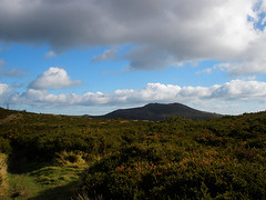 1st March scenic walk (St.Stello) Tags: ireland pinky cowicklow