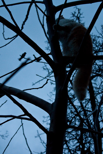 Day 6 - Night hunting by Mourner via Flickr