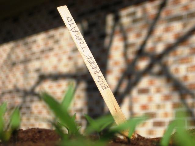seeds5