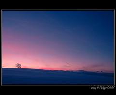 (pdel64@photography) Tags: pink blue winter light sunset sky cloud sun snow color tree annecy rose nikon d70 lumire hiver bleu ciel lonely neige nikkor nuage arbre couleur coucherdesoleil seul numeric nikonian bornes nikoniste colorphotoaward pdel francelandscapes philippedelobel pdel64 numerix