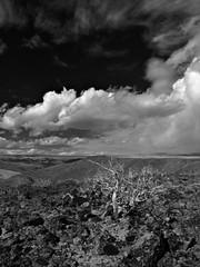 Old Sage (Nurse Kato) Tags: monochrome clouds landscape washington solitude polarizer openspaces g10 lensmate canonpowershotg10 canong10 powershotg10