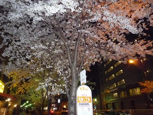 広尾の夜桜