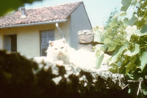 FOTOGRAFIA 12.5 - bianca da Casa Greta.