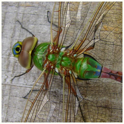 On the back of the dragonfly and in his transparent wings...