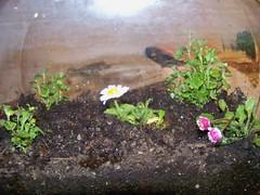 Pua's Fairy Garden