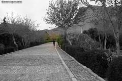 فردای سبز (saeid.goodarzi) Tags: mountain nature canon iran persia iranian ایران esfahan بهار اصفهان سبز فروردین ایرانیان صفه فردا ادیت eos1000d