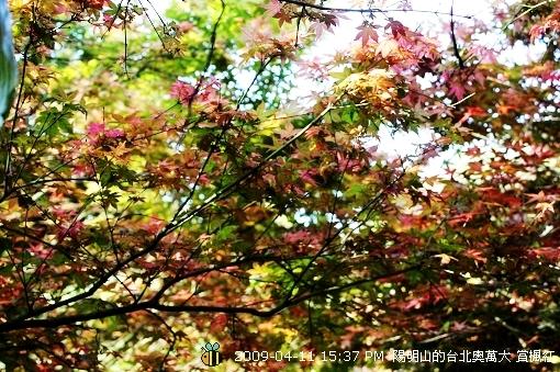 09.04.11台北奧萬大賞楓紅 (23)