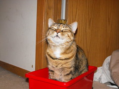 Happy Cat Chose Red (Tabbymom Jen) Tags: red silly cat happy 2000 box tabby kitty explore nina 1500 torbie cc800 cc700 cc400 cc300 cc200 cc100 cc500 cc1500 cc1000 cc600 cc900 cc4000 cc2000 cc3000 cat1000 cc5000 cc1250 cat600 cat800 cat700 cat900 cc6000 cc8000 cc7000 cat1250 cc9000 cc10000 pets3000 pets4000 pets7000 pets5000 pets6000 pets8000 pets9000 pets10000