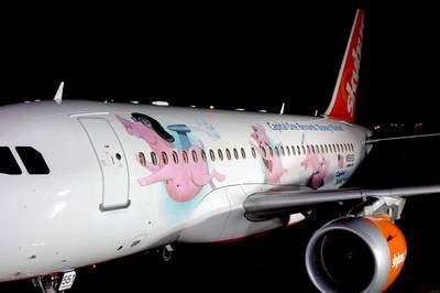 airborne pigs
