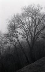 (Jordan Armstrong) Tags: trees blackandwhite bw fog canon eos hill hp5 ilford a2 foggydays