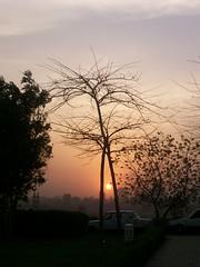 Cairo: Capturing the Sun (Stationary Nomads) Tags: park trees sunset cars grass skyline evening dusk branches egypt cairo minarets nightfall cityskyline misr masr alazharpark alqahira cairoskyline
