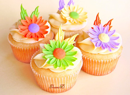 Daisy Cuppies