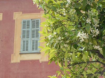 fleur d'oranger au Musée Matisse.jpg