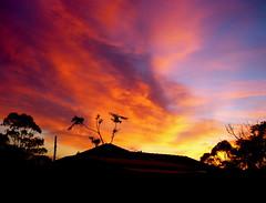 sunset (S.o.L.e) Tags: trees sunset sky orange yellow firelike