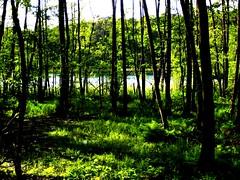 picnikfile_RMnu4M (jacoblindloff) Tags: trees summer sun tree green nature water forest germany landscape log stem natur lac trunk belle landschaft bole schn carwitz stpring
