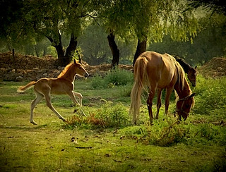 horses explore fp foal raindancer littlestories explorefrontpage utehagen uteart picswithsoul ranchochimalli explore060909