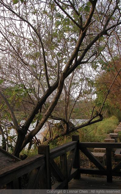 鳥松鄉濕地公園-0003