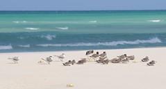 Qansaliyah beach (Stefan Geens) Tags: yemen socotra