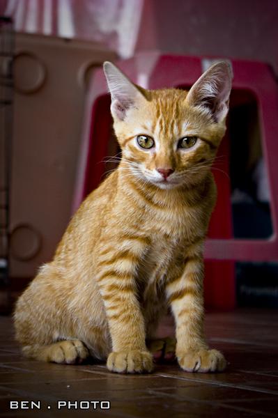 Cat-5