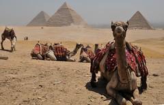 The Pyramids of Giza (c.2575–c. 2465 BC). (MelindaChan ^..^) Tags: heritage history animal ancient triangle desert ruin egypt mel cairo camel egyptian pyramids melinda giza triangular melmel 駱駝 沙漠 埃及 金字塔 chanmelmel melindachan