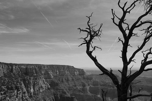 Grand Canyon B&W