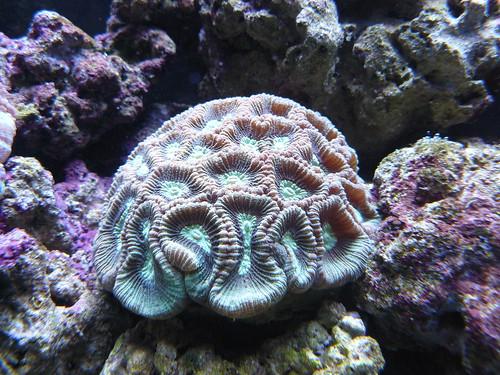 to the aquarium we went