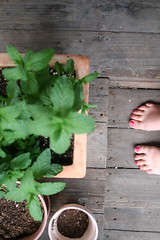 (mimminie) Tags: feet evening mint latespring pinktoenails