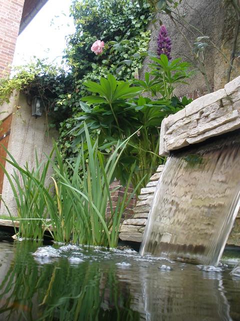 mon p'tit bassin dans mon p'tit jardin - Page 2 5822276330_1712c283b2_z
