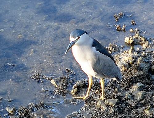 Another bird at Ala Moana