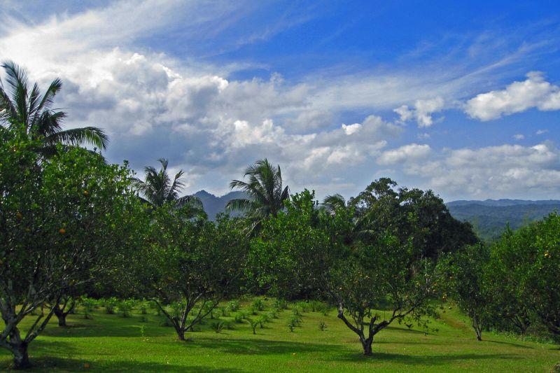 Jamaica Landscape 2