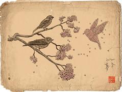 Blossom Bird (igo2cairo) Tags: