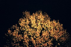 (Louis_Sitbon) Tags: from old trees our leaves 50mm still fuji superia 1600 contax when there were rolls rx f17